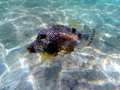 Fish in the Marine National Park