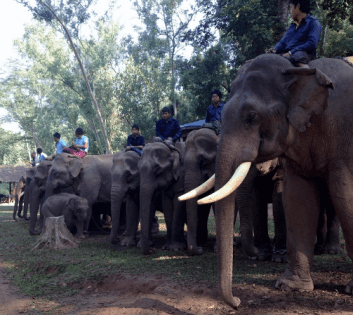 Mahouts atop their elephants are training them to work in a less violent world