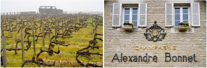 Les Riceys is the only wine growing area of the Champagne region to have three Appellation d'Origine Contollees. It is the major supplier of grapes for Alexandre Bonnet.